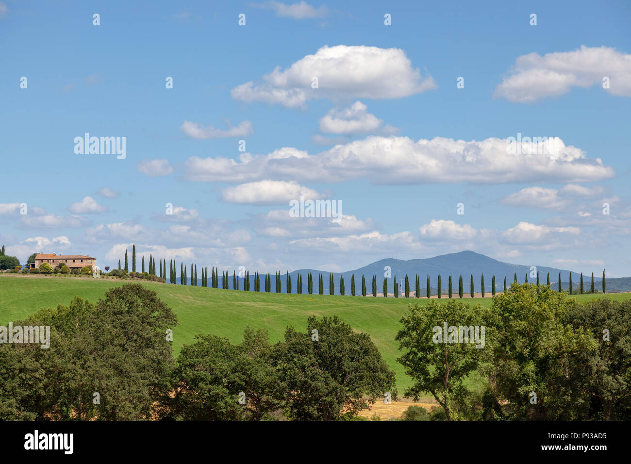 In the vicinity of the Bagno Vignoni (Tuscany - Italy), a perfect alignment of cypresses leading to a property. A proximité du Bain Vignoni (Toscane - - Stock Image