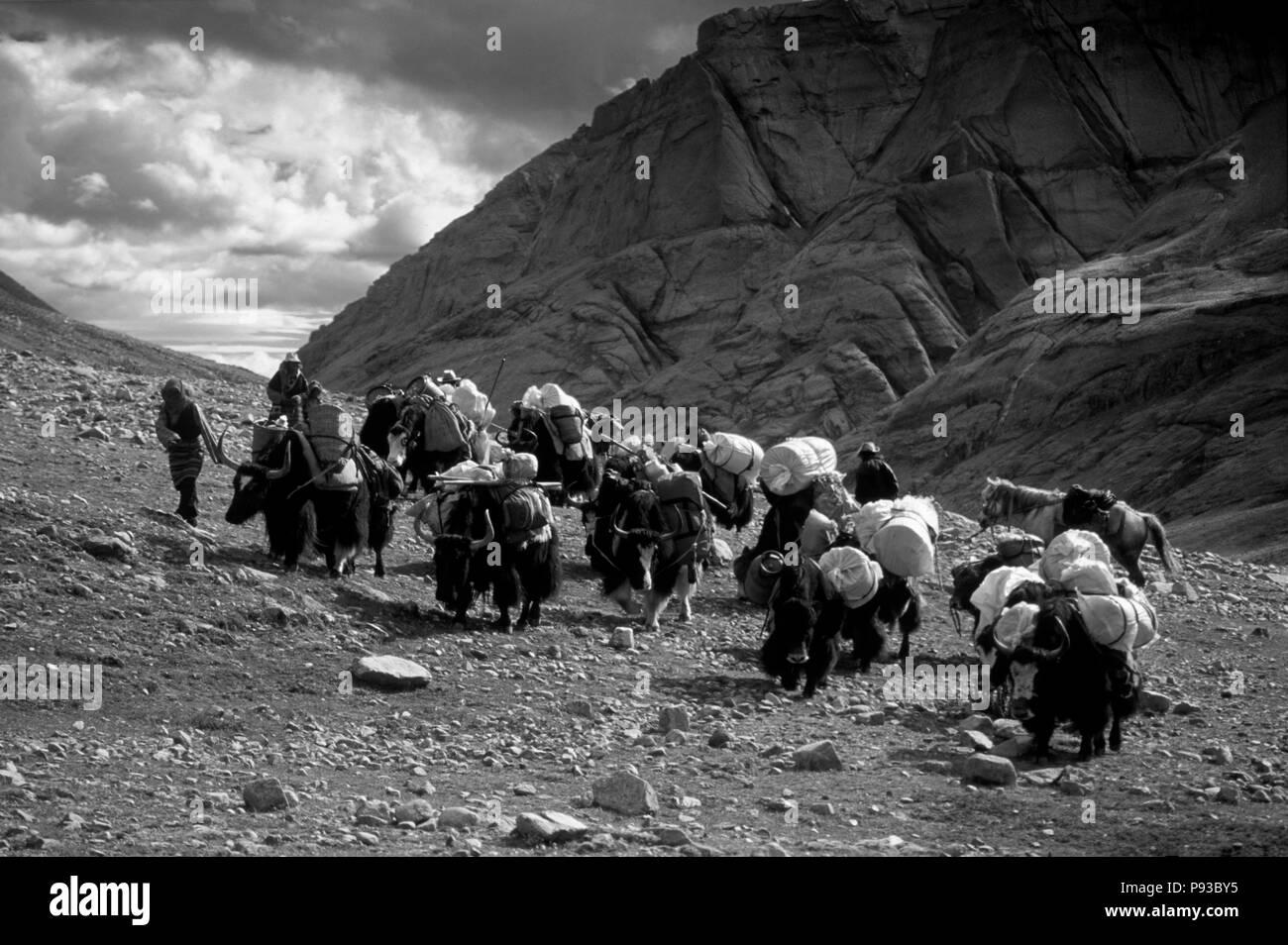 YAKS and PILGRIMS do KORA around MOUNT KAILASH (6638 METERS) the most sacred HIMALAYAN PEAK - TIBET - Stock Image