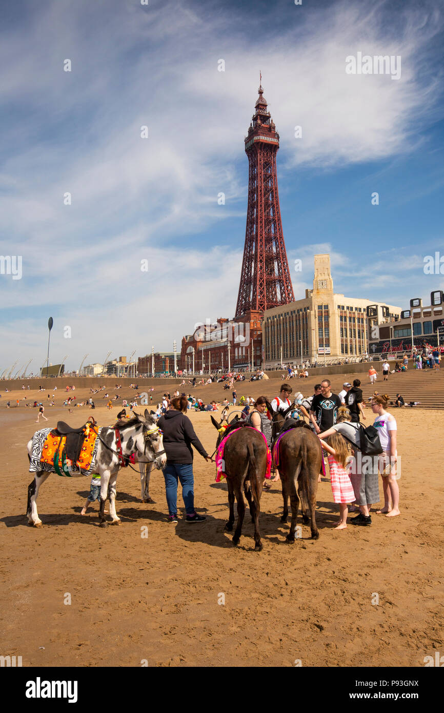 UK, England, Lancashire, Blackpool, donkeys on beach below Blackpool Tower giving children rides Stock Photo