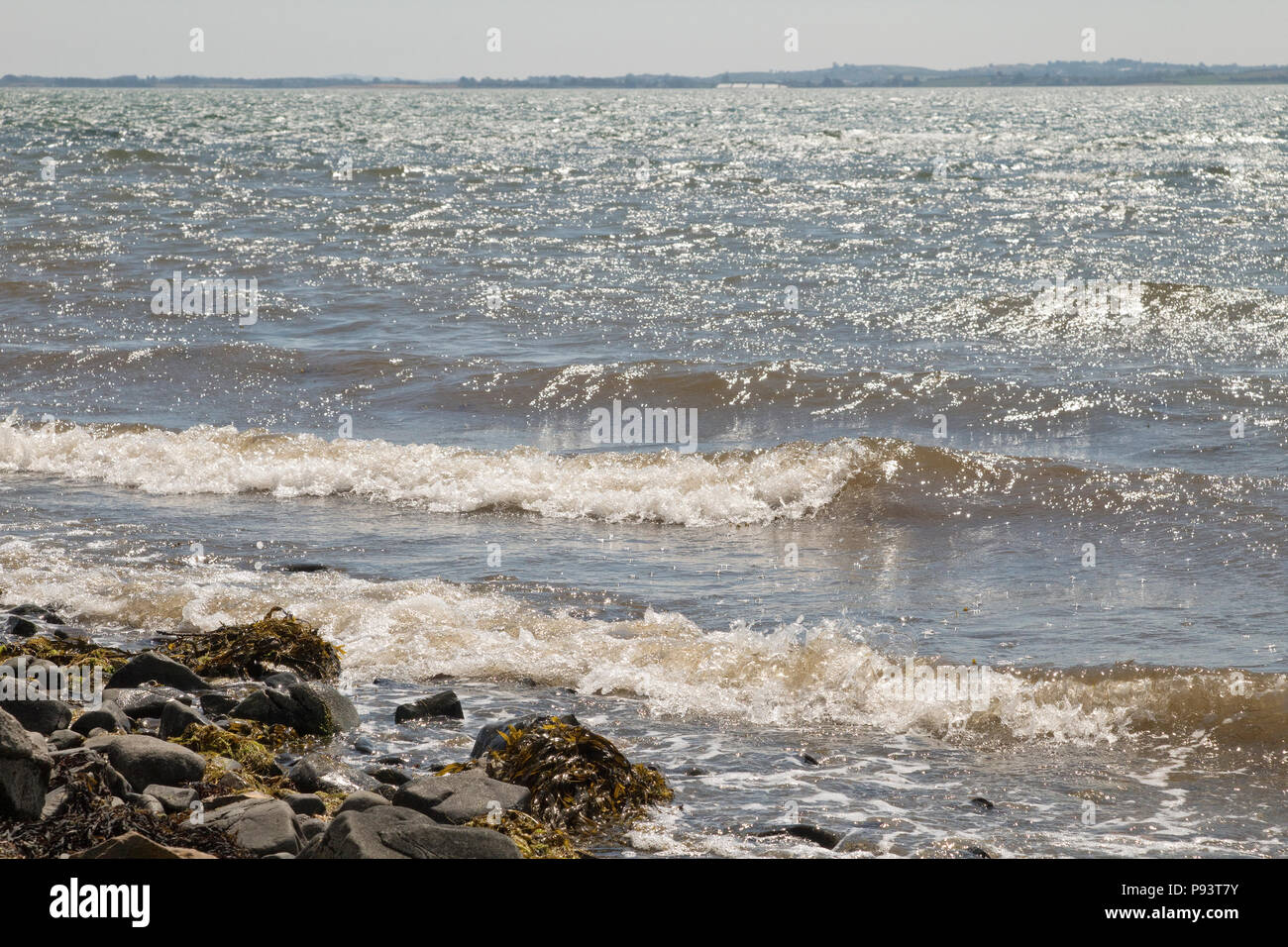 Shoreline at Strangford Lough, Co Down - Stock Image