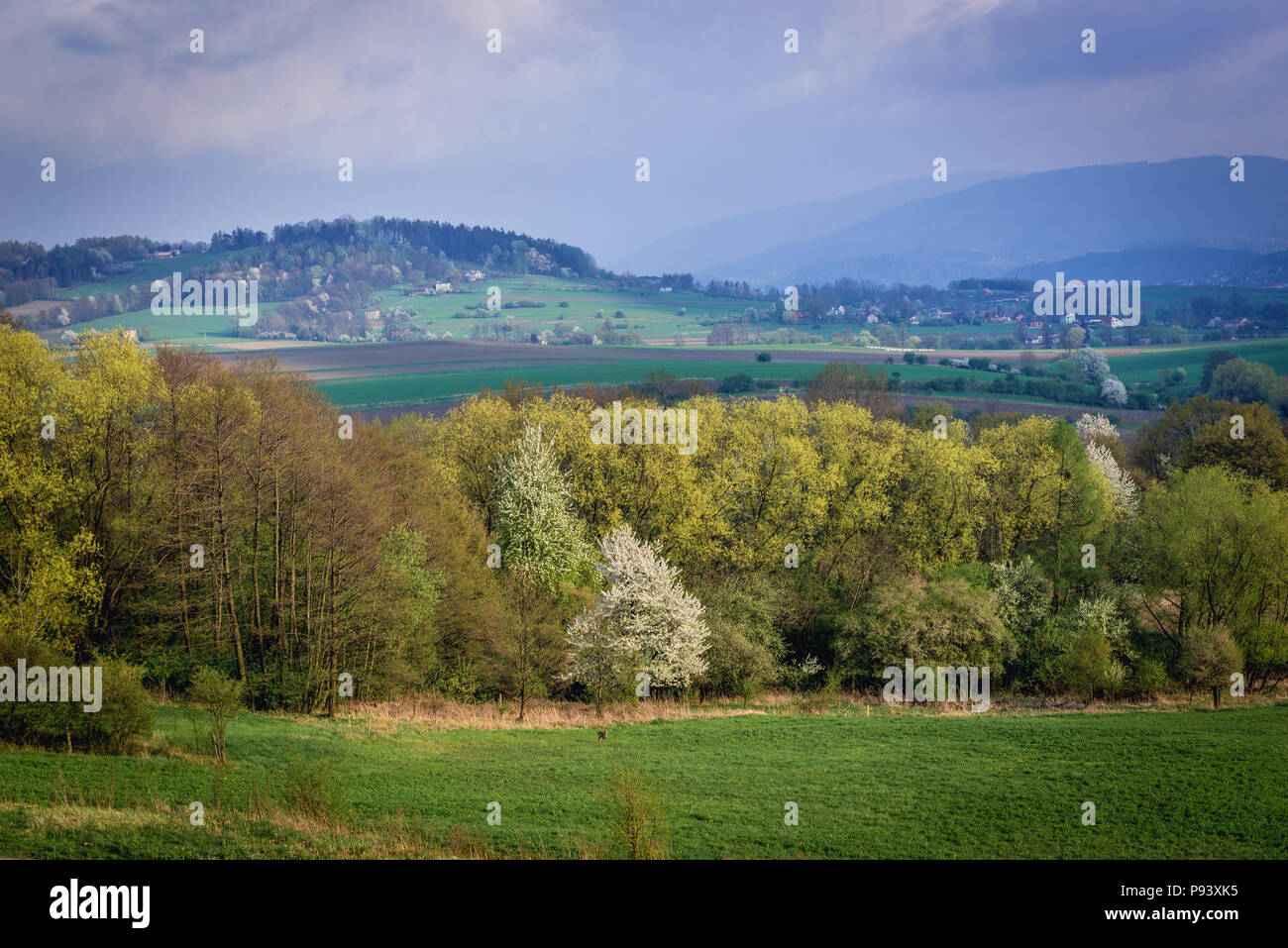 Aerial view of rural landscape near Bielsko-Biala city in Silesian Voivodeship of Poland - Stock Image
