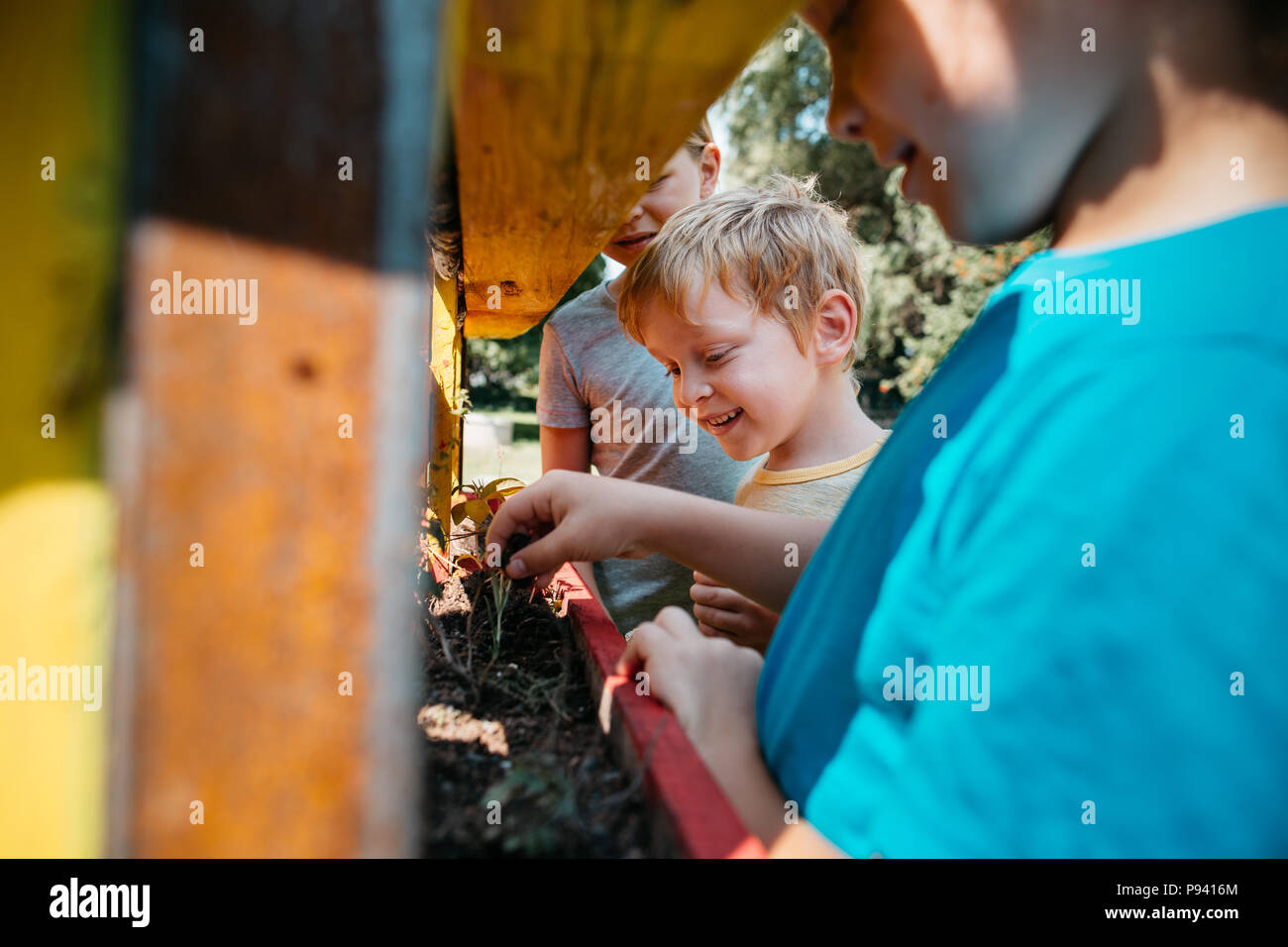 Young students learning about plants in a park. Group of children planting plants together in a garden on a sunny day. - Stock Image