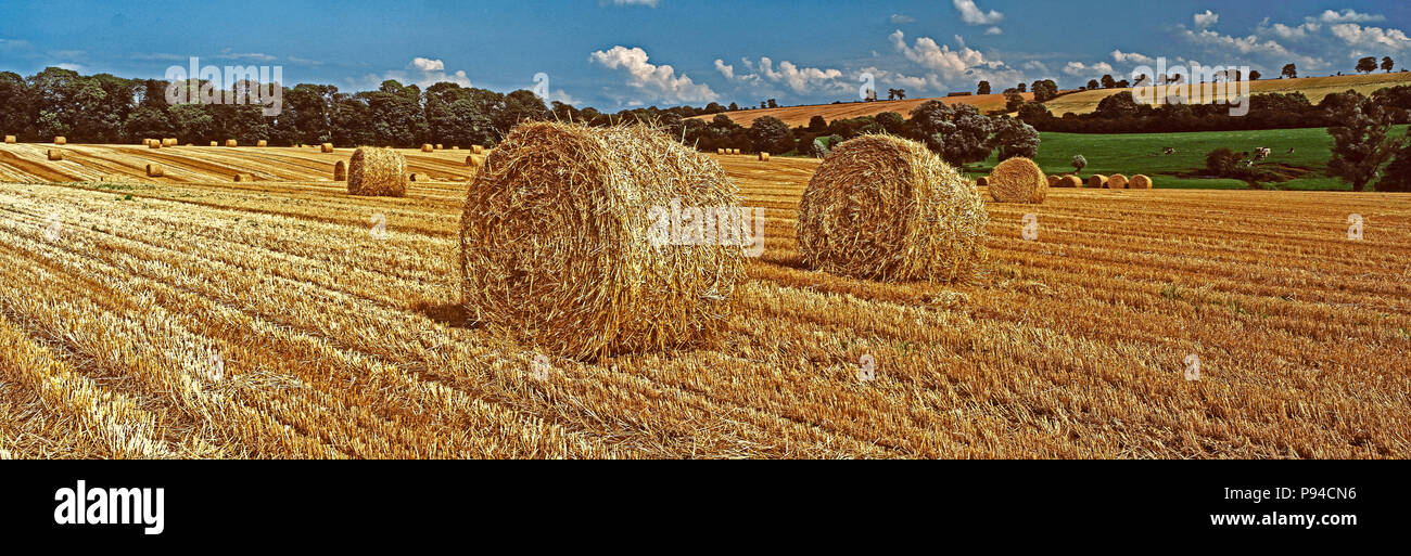 Panoramic view of a harvested wheat field with Straw Bales in the Rutland English countryside - Stock Image