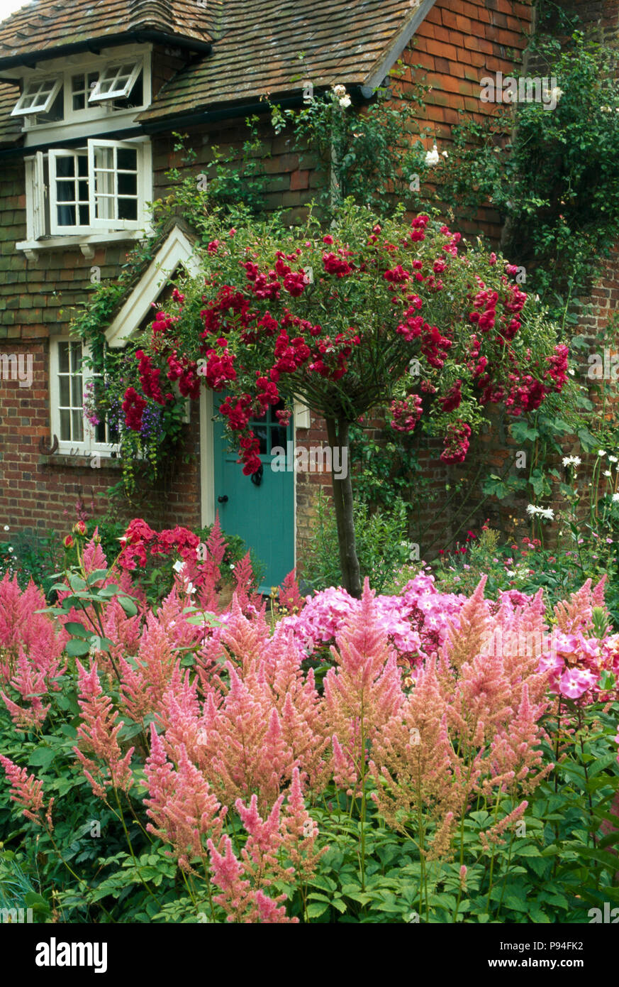 red standard rose in summer border with pink astilbe and phlox in