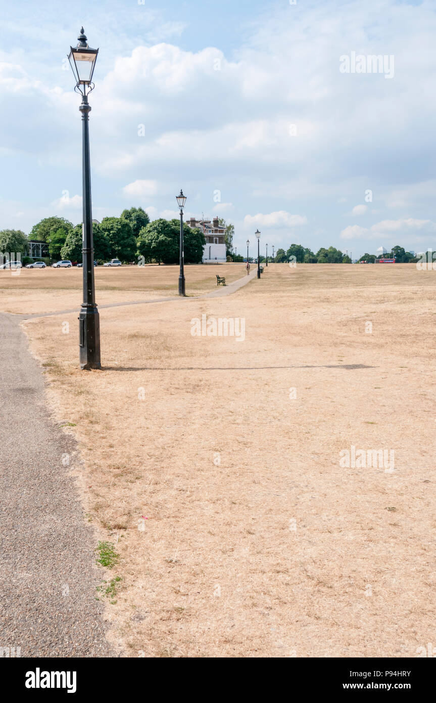 Dry, brown grass on the heath at Blackheath during the hot summer of 2018 - Stock Image