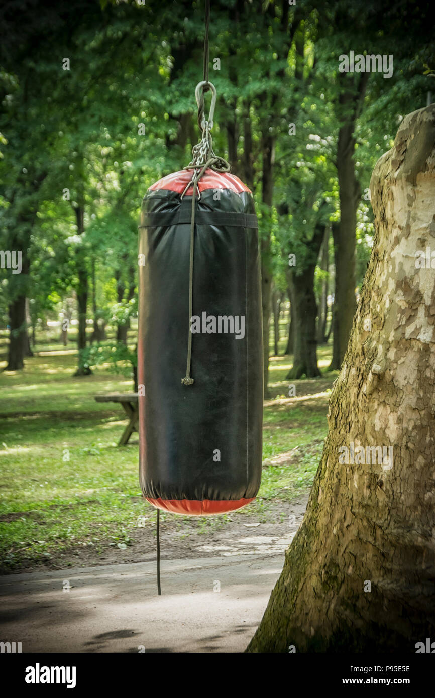 A punching bag hang from a tree - Stock Image