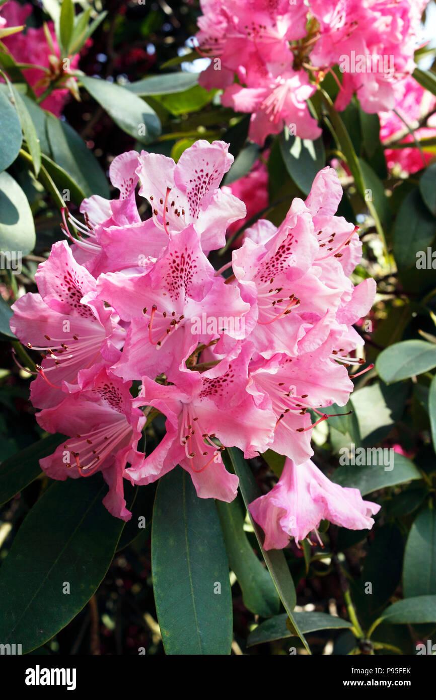 Cynthia Flowers Nude Photos 73
