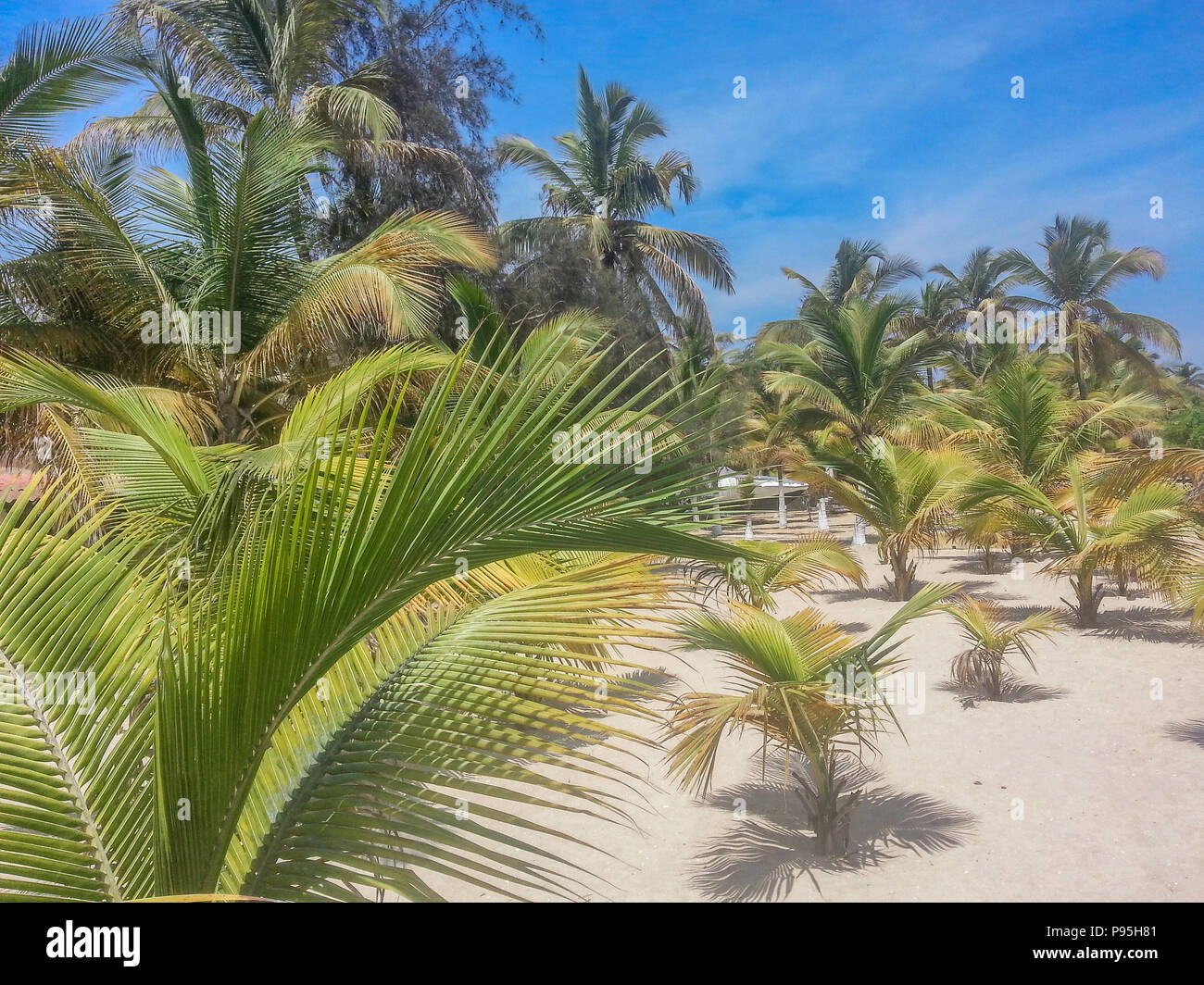 tropical beach with palm trees, sand and blue sky, located on the island of Mussulo in Luanda, Angola - Stock Image