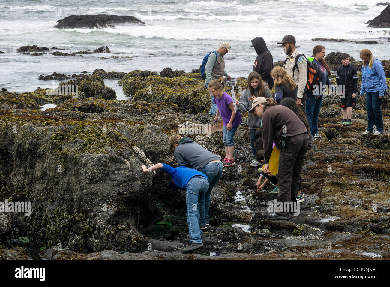 Schoolkids on a educational school trip to discover the tidepools sea life with rangers at Cobble Beach, Yaquina Head Outstanding Natural Area, Oregon - Stock Image