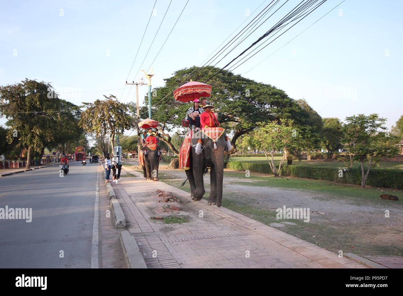 Elephant-walk at Ayutthaya. Stock Photo