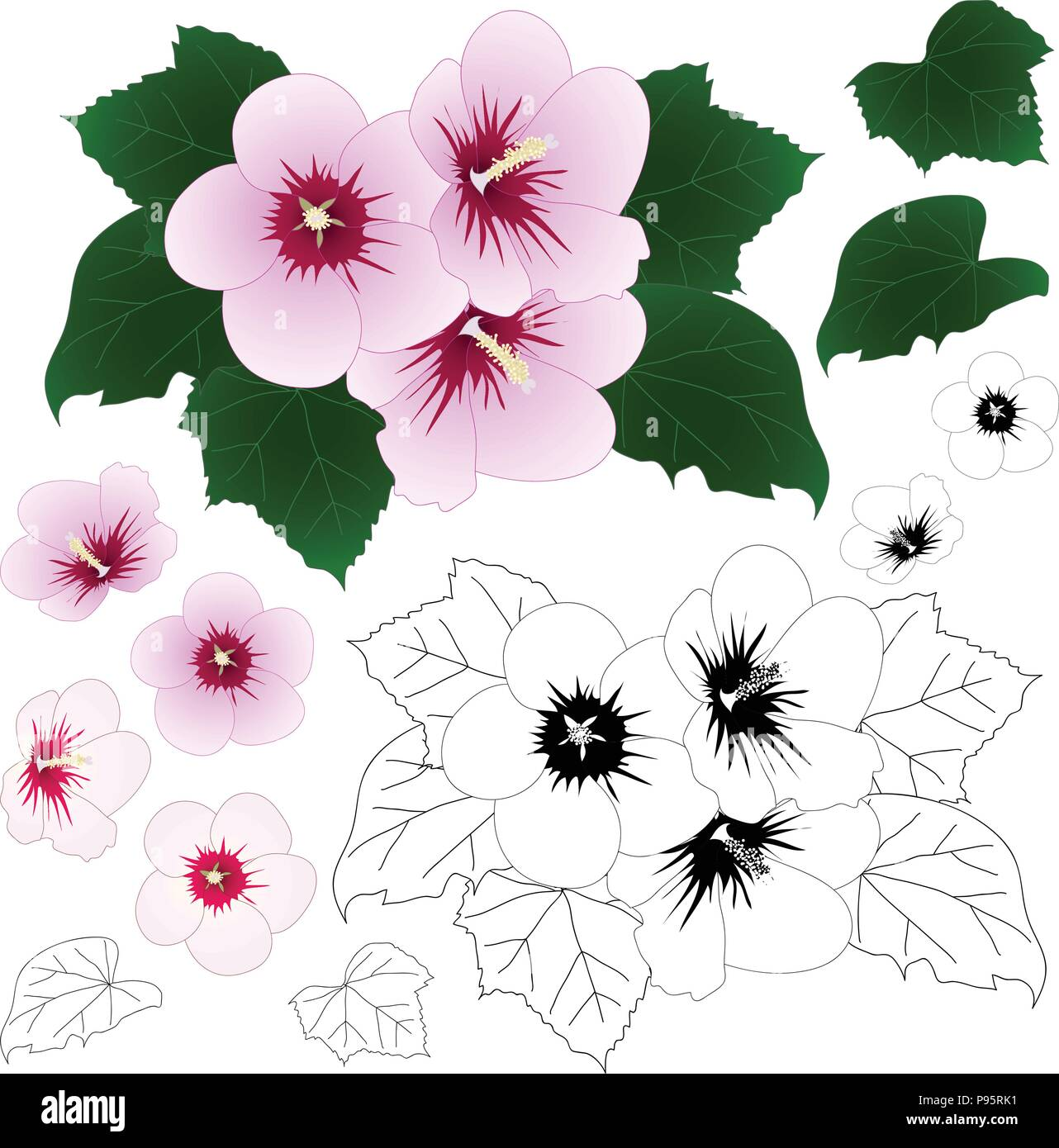 Hibiscus Syriacus Rose Of Sharon Outline Vector Illustration