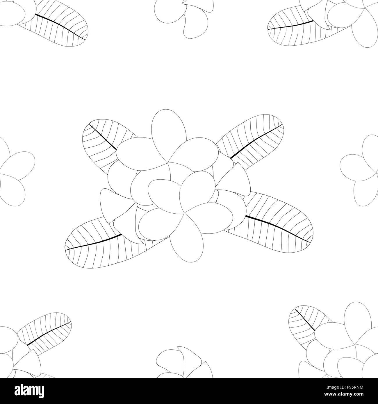 Plumeria, Frangipani on White Background. Vector Illustration. - Stock Vector
