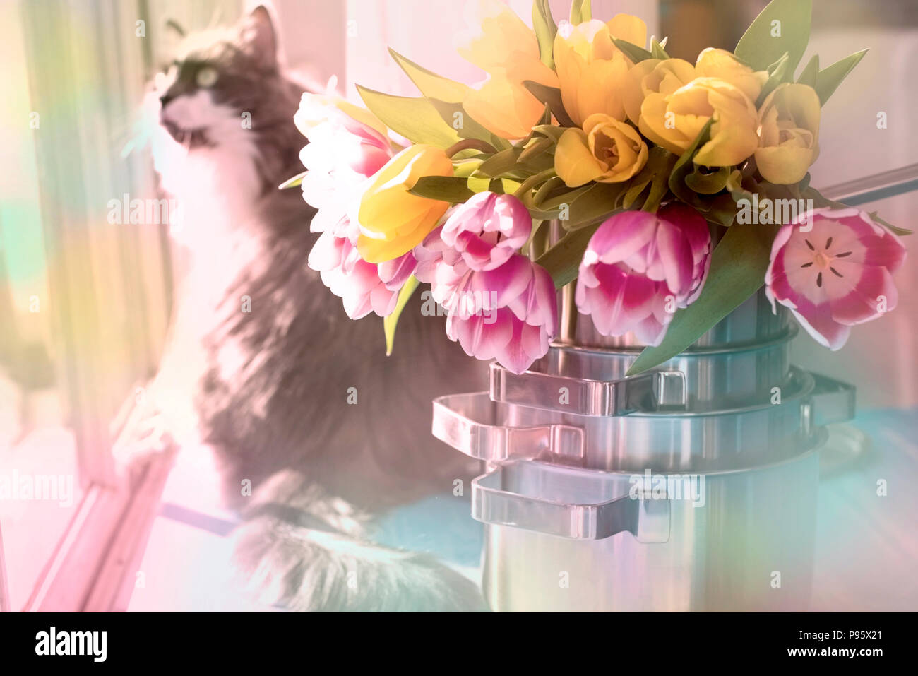 A Bouquet Of Spring Tulips In A Saucepan And A Fluffy Cat Sunlight