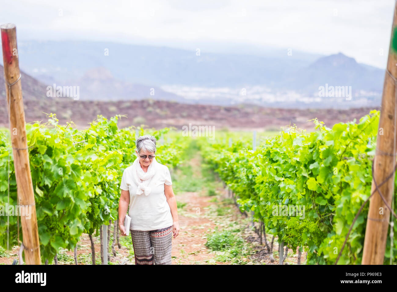 beautiful caucasian senior adult woman walk in the country yard near the new next wine production. loneliness and vacation for mature people - Stock Image