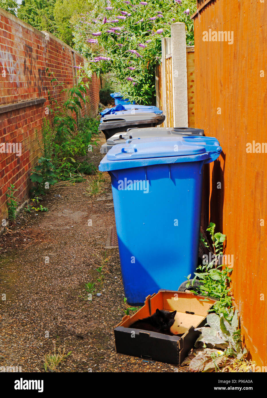 Waste and recycling bins with a cat in a box in a back alley in Norwich, Norfolk, England, United Kingdom, Europe. - Stock Image