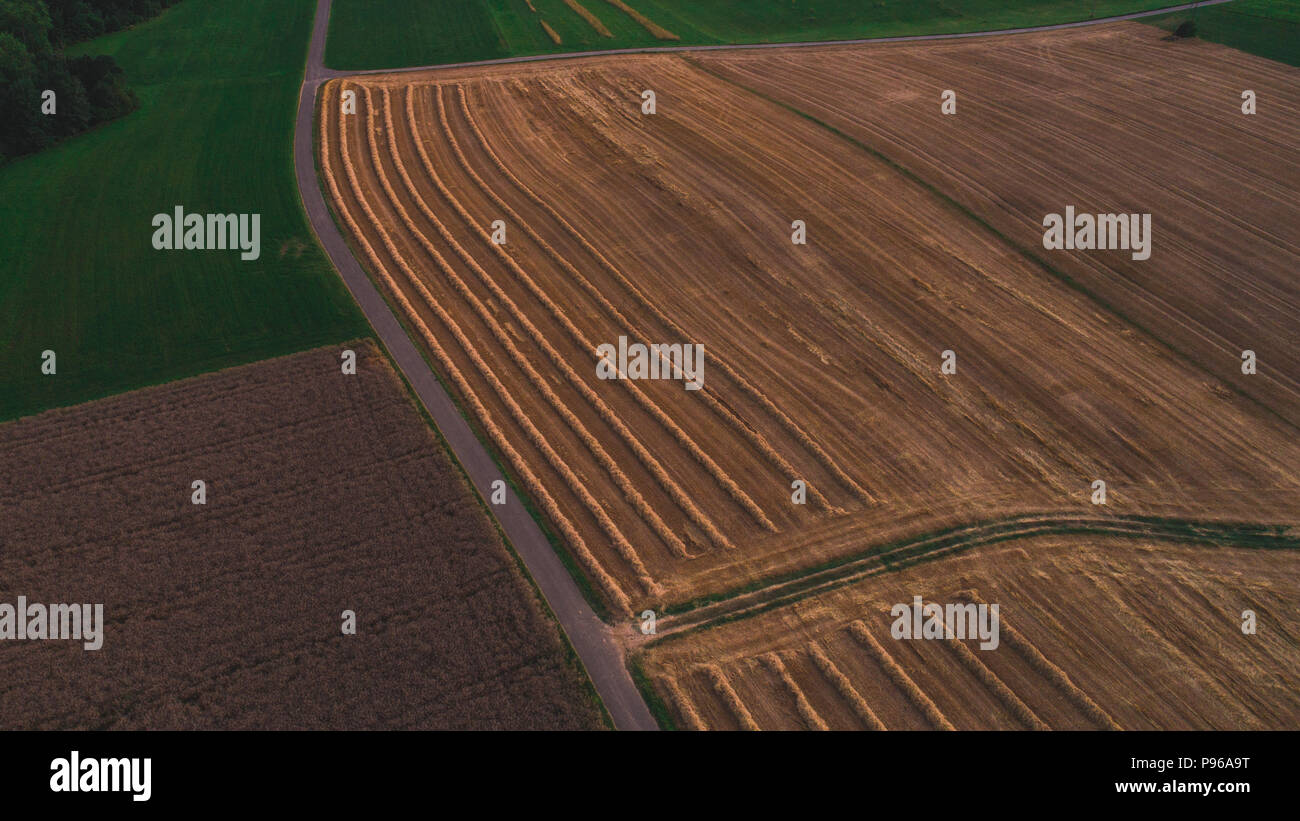 cropped wheat field aerial drone shot top down - Stock Image