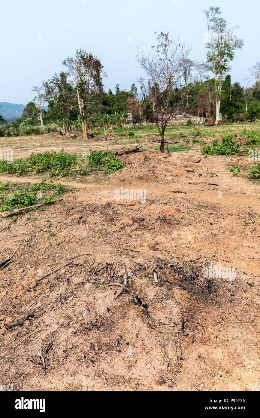 Field cleared for planting, Nong Ping village, Laos - Stock Image