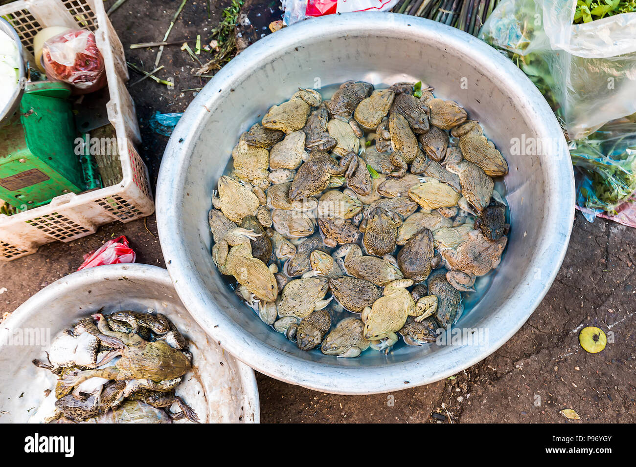 Frogs and toads on sale for food in market, Pakse, Laos - Stock Image