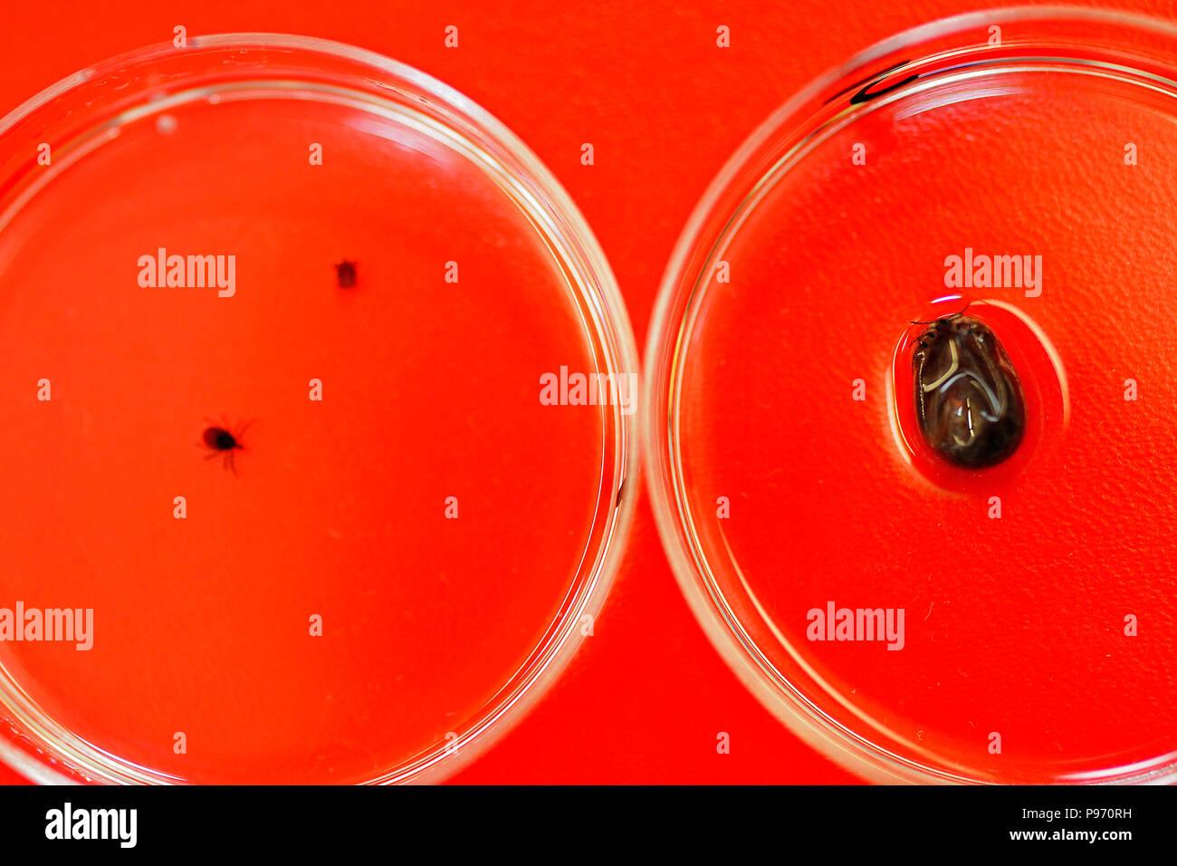Germany, North Rhine-Westphalia - Chemical Veterinary Examination Office in Krefeld - Stock Image