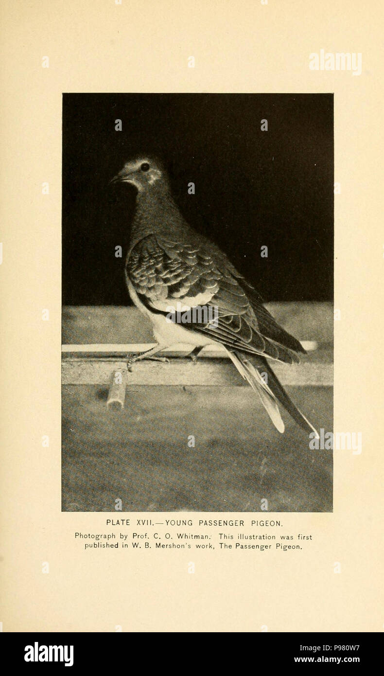 A history of the game birds, wild fowl and shore birds of