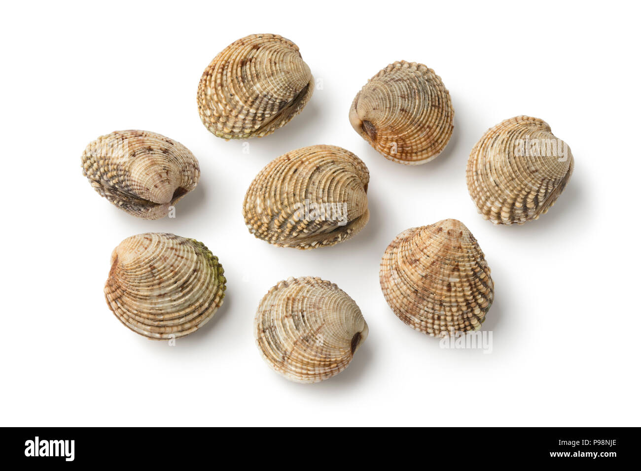 Fresh raw warty venus clams isolated on white background - Stock Image