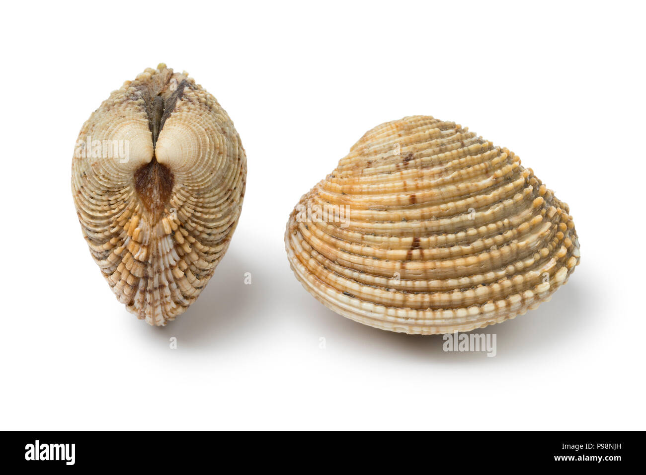 Pair of two fresh raw warty venus clams isolated on white background - Stock Image