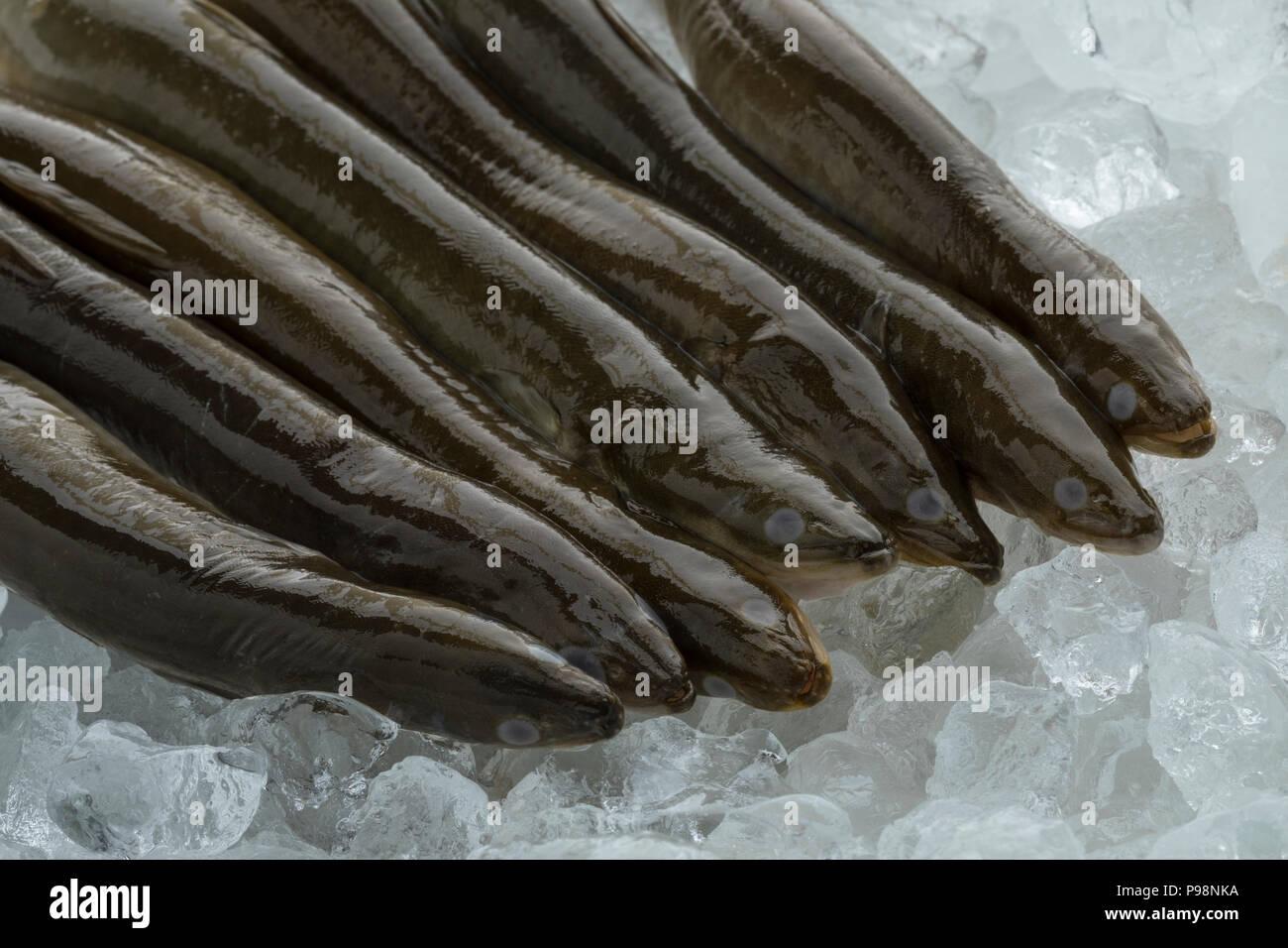 Fresh raw mature European eels on ice Stock Photo
