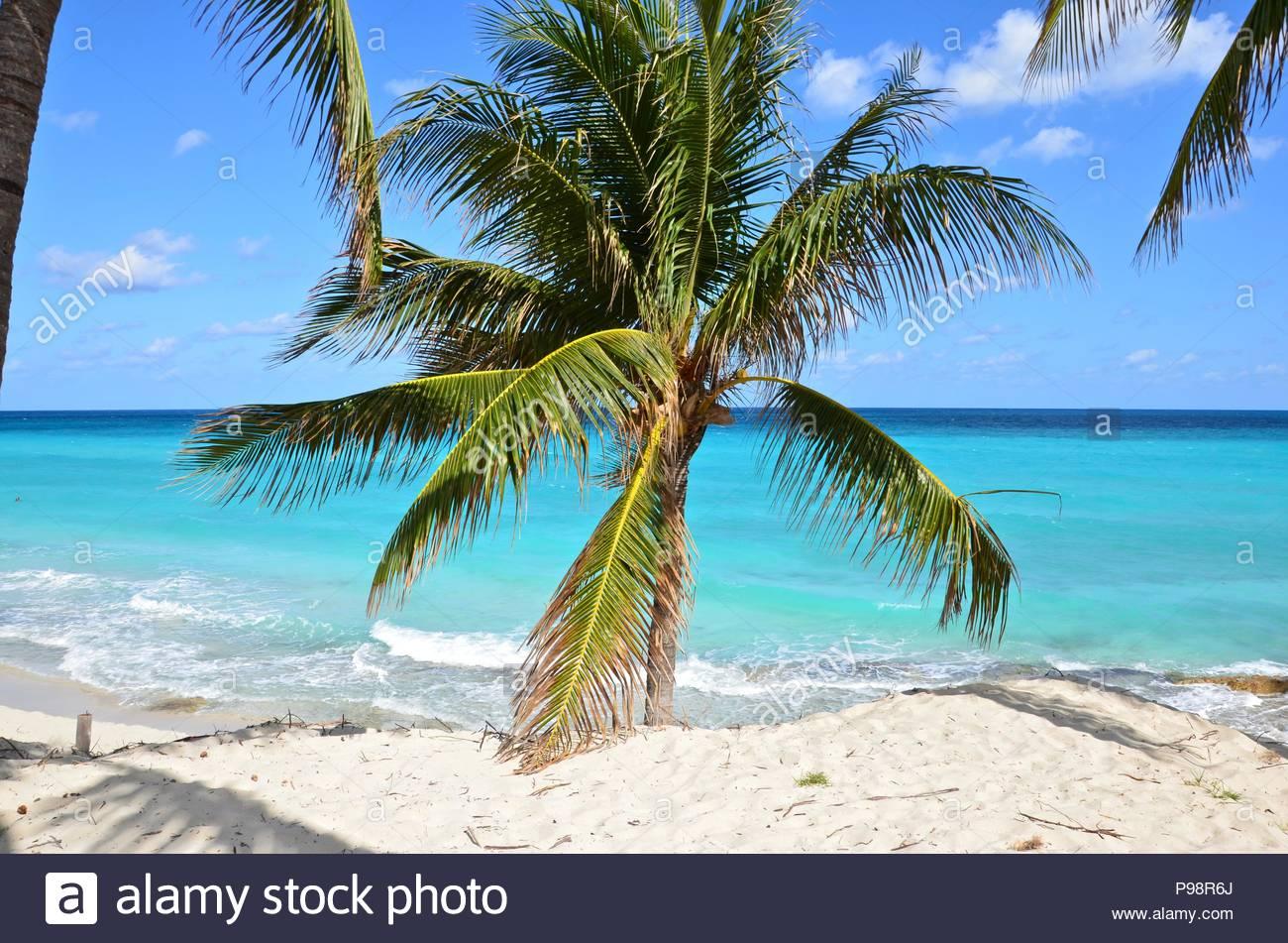 Palm Tree On The Beach Of Varadero Cuba Caribbean Sea Turquoise Water Sunshine