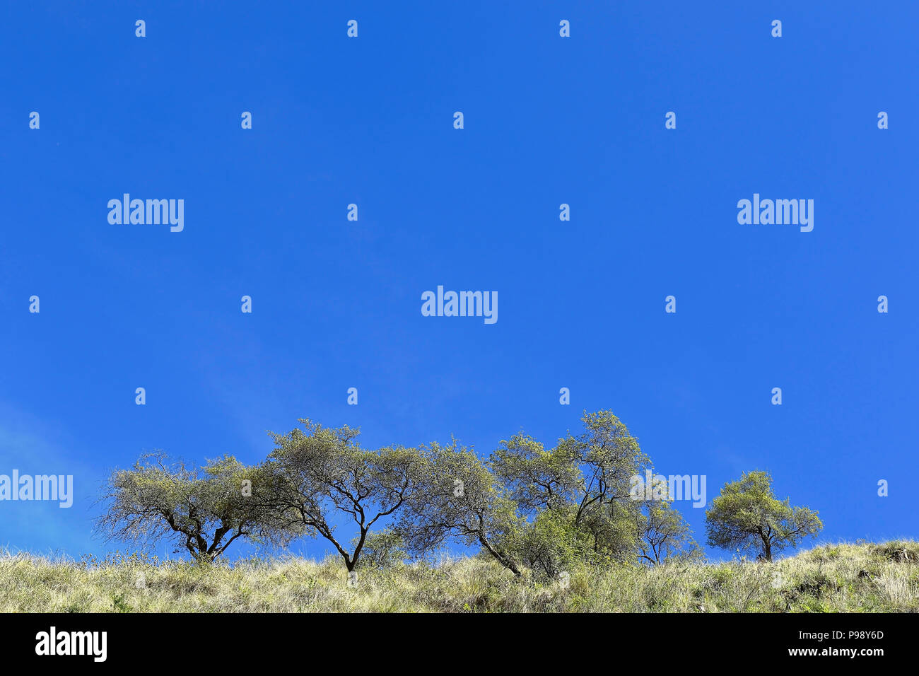 Trees on the top of the mountain trimmed over the blue sky - Stock Image