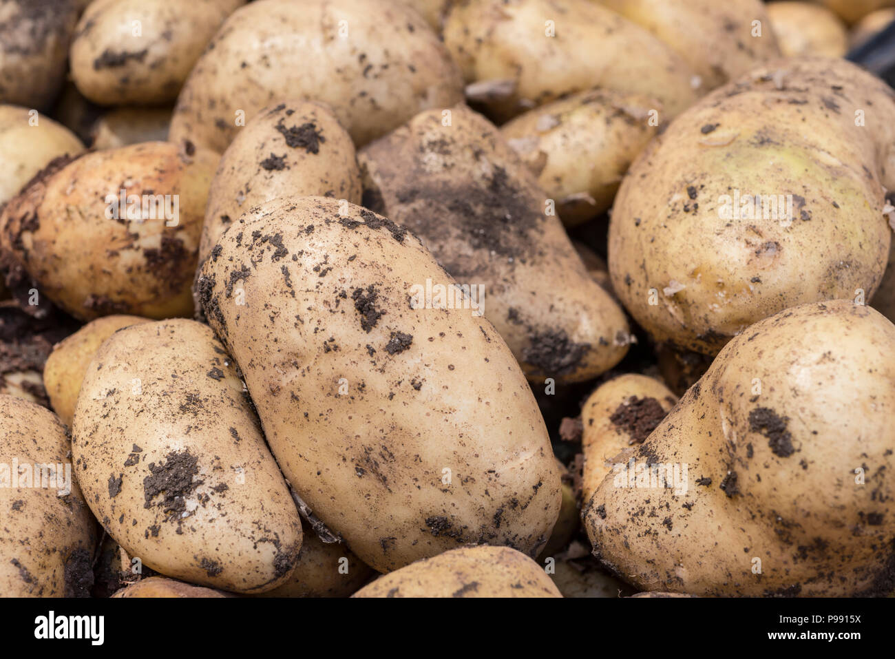 Potatoes in a market - Stock Image
