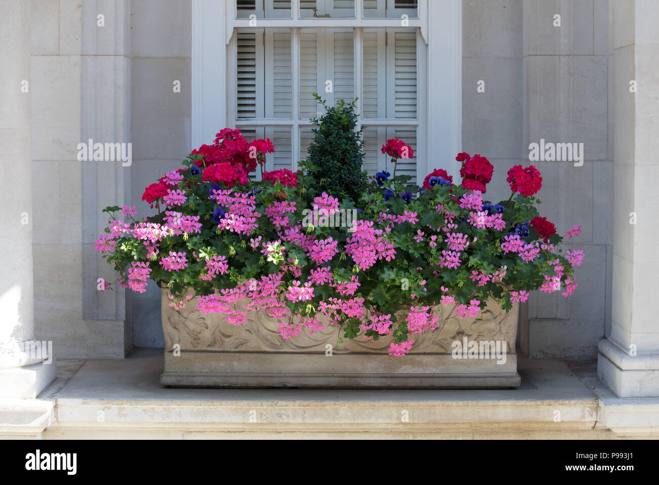Small gardens: window box with summer flowers and plants in Mayfair, London - Stock Image