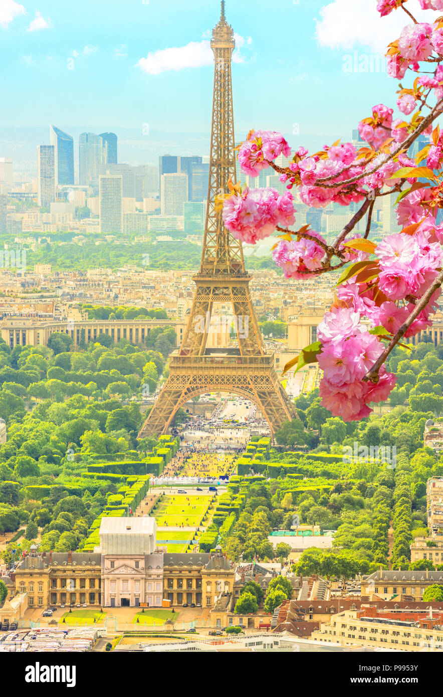 Cherry blossom branch in foreground and cityscape skyline of Paris with Eiffel Tower on background. Seasonal picturesque background. Scenic wallpaper with Eiffel Tower. Vertical shot. - Stock Image