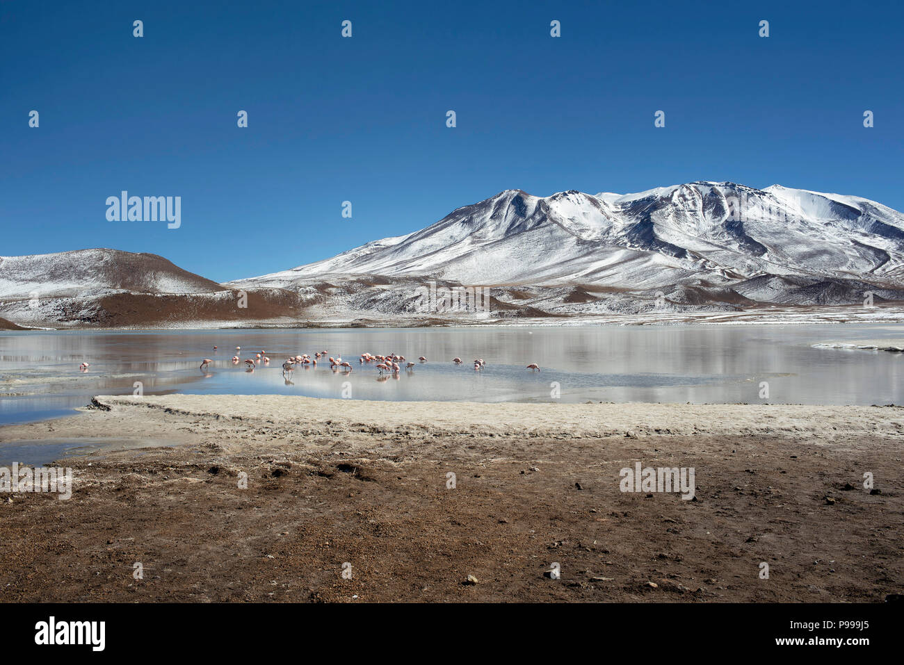 The wintery landscape of Laguna Cañapa (Cañapa salt lake) in the Potosí Department, Bolivia. - Stock Image