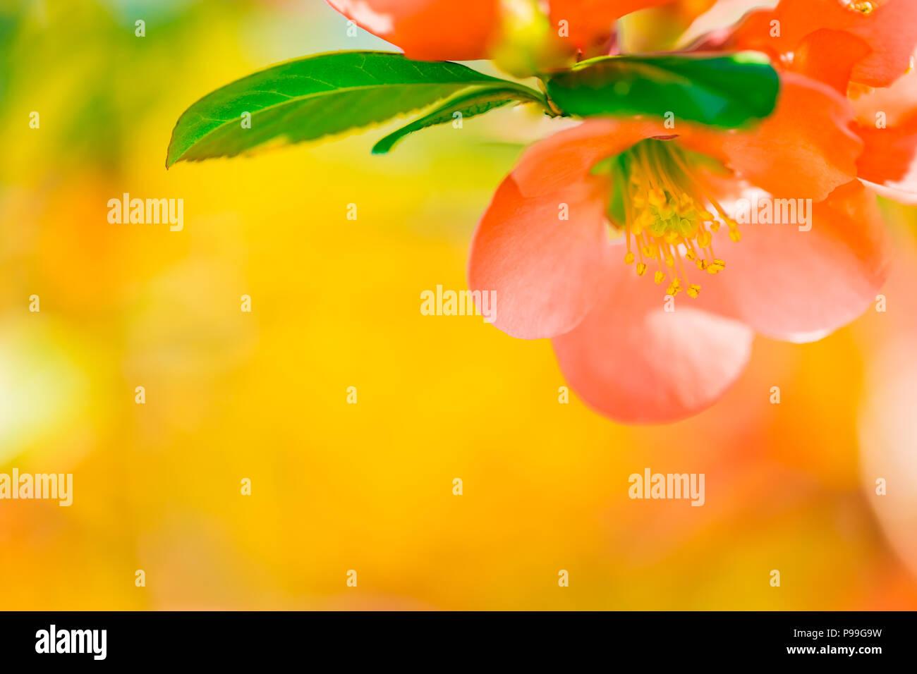 Beautiful Spring Nature Background Closeup Flower Banner