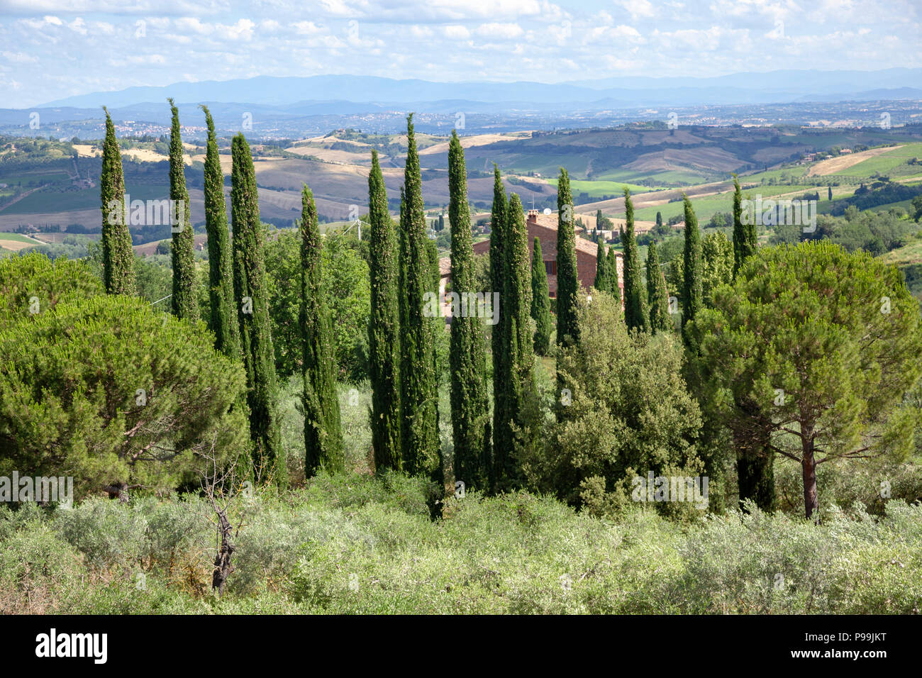 In the vicinity of the church of San Biagio (Tuscany - Italy), a curtain of cypresses protecting a property from the wind. - Stock Image