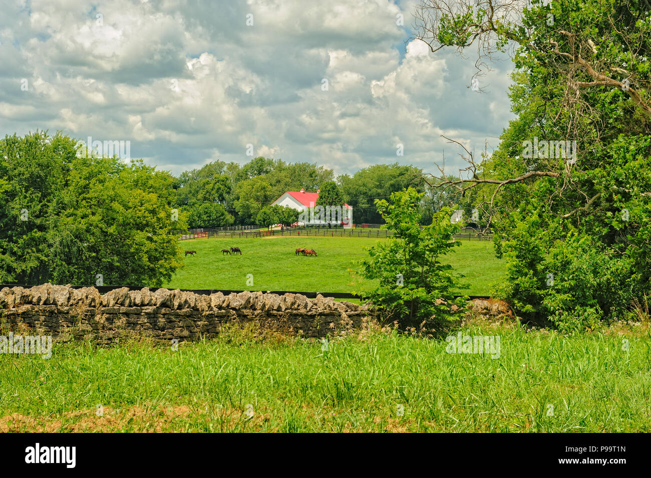 Kentucky horse farm - Stock Image
