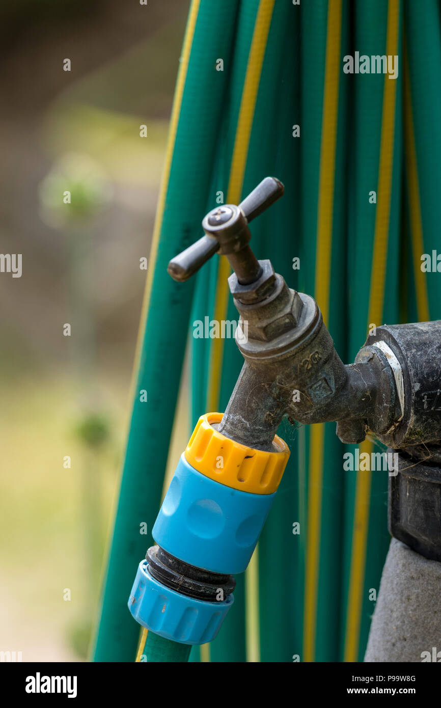 a vintage brass outside tap with a hosepipe attached - Stock Image