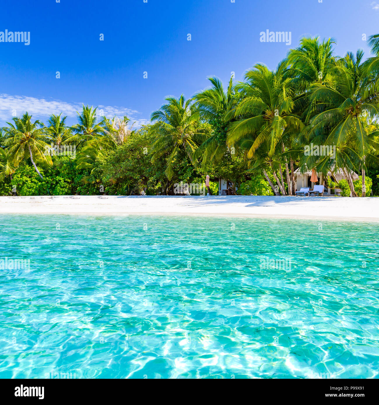 Beautiful beach with palm trees and moody sky. Summer vacation travel holiday background concept. Maldives paradise beach. Luxury travel design - Stock Image