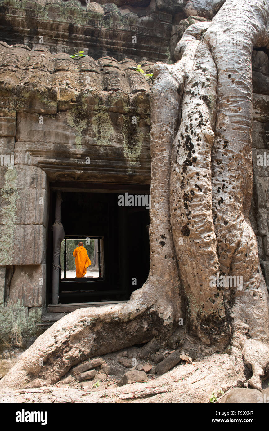 Giant tree roots and monk in temple Ta Prom Angkor wat Stock Photo