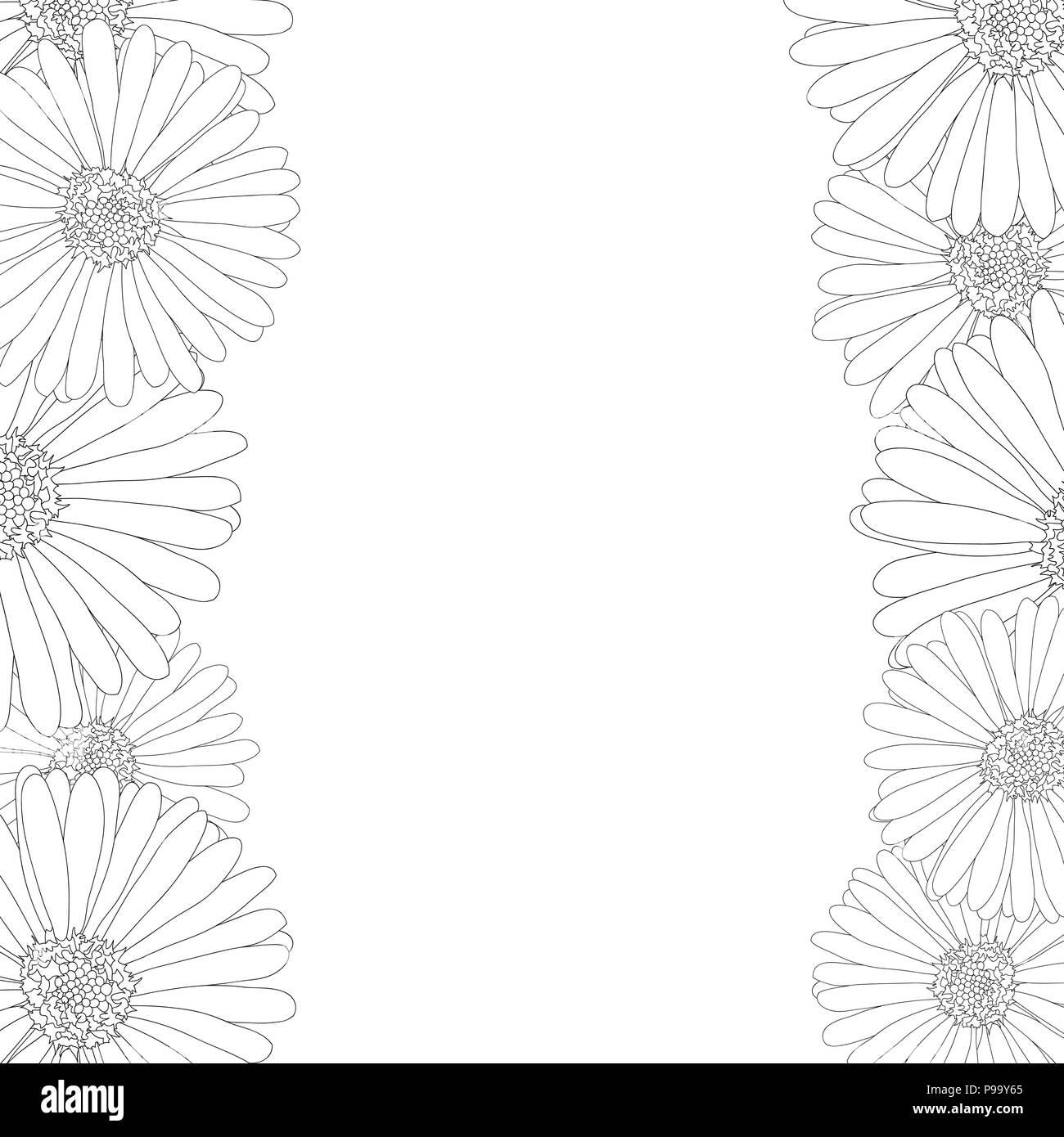 Michaelmas Daisy Black And White Stock Photos Images Alamy