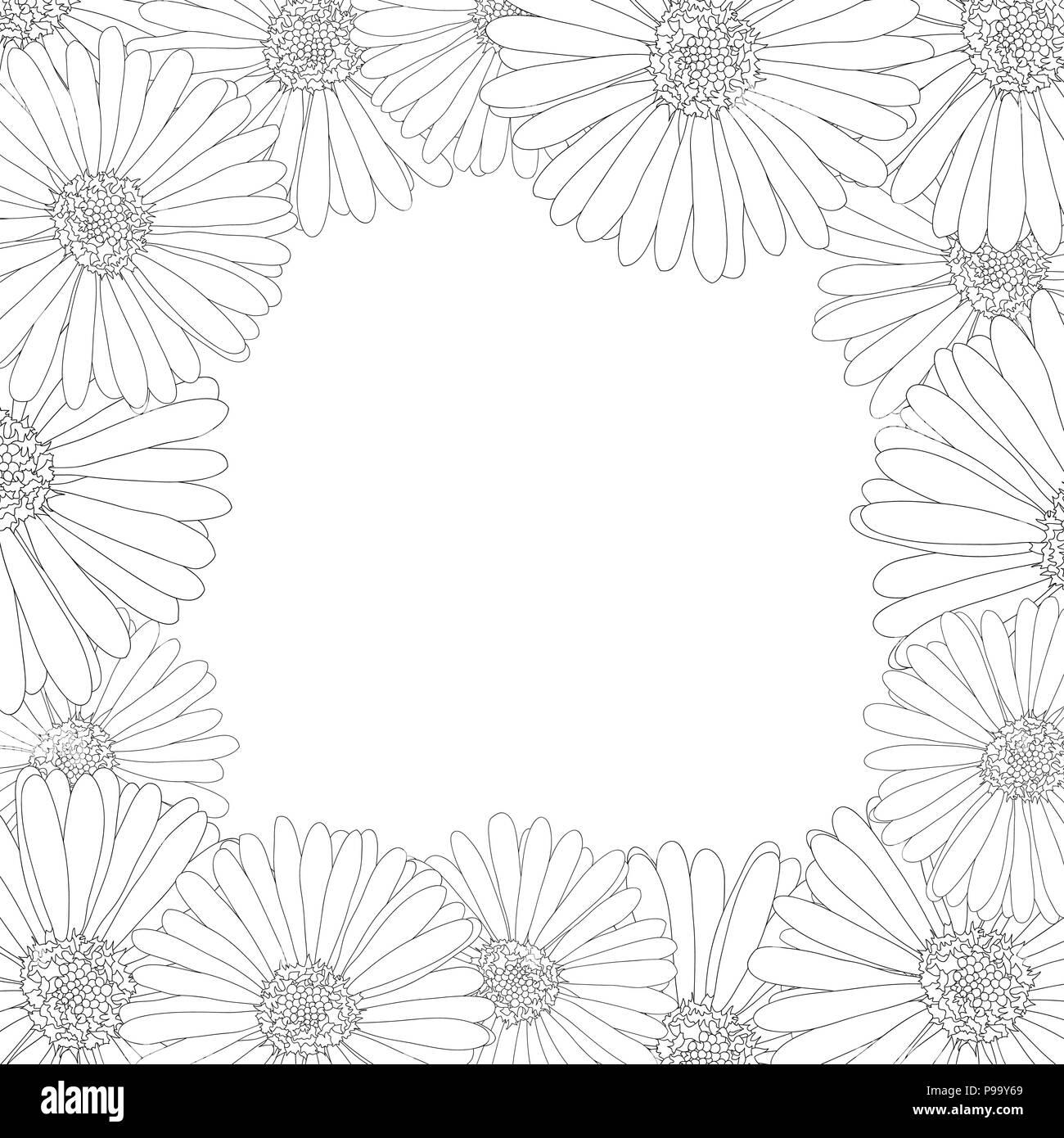 Aster Daisy Flower Outline Border Vector Illustration Stock Vector