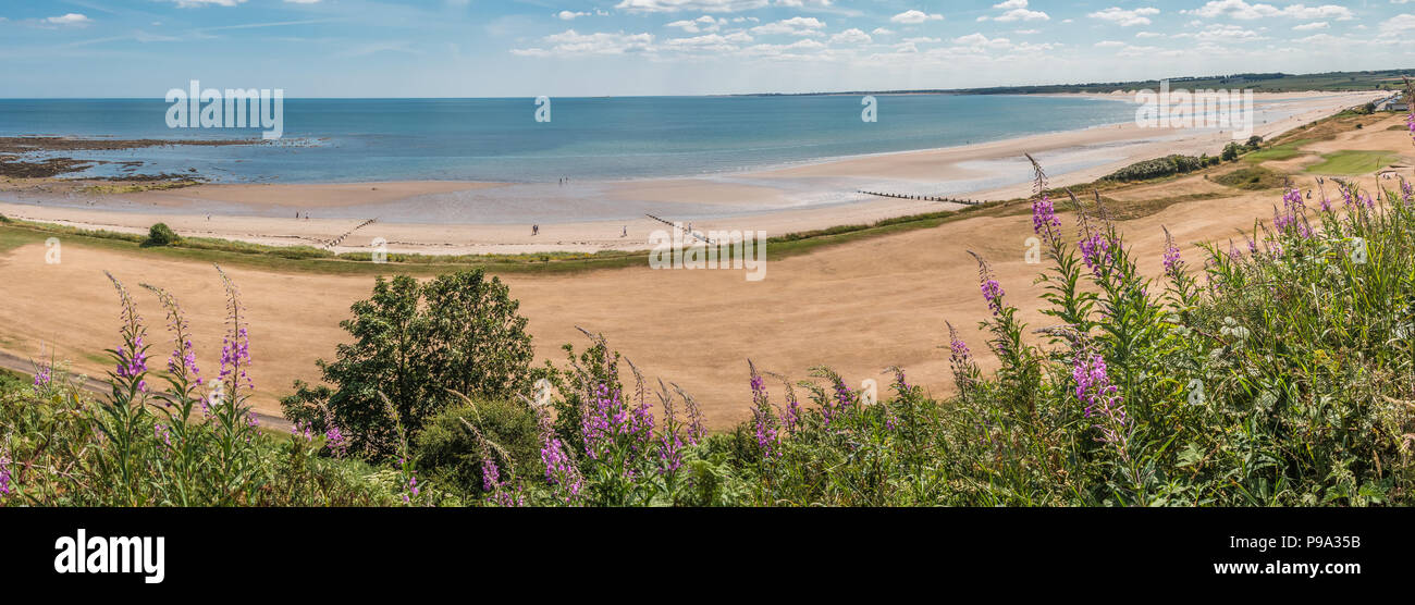 Northumberland Coast AONB, panoramic view of Alnmouth beach and a parched golf course after  a long hot dry spell in 2018 - Stock Image
