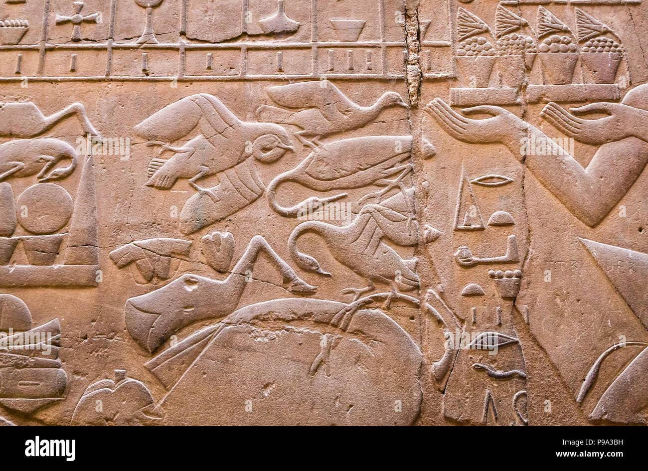 Close up detail of Ancient Egyptian hieroglyph, Luxor Temple, Luxor, Egypt, Africa featuring birds - Stock Image