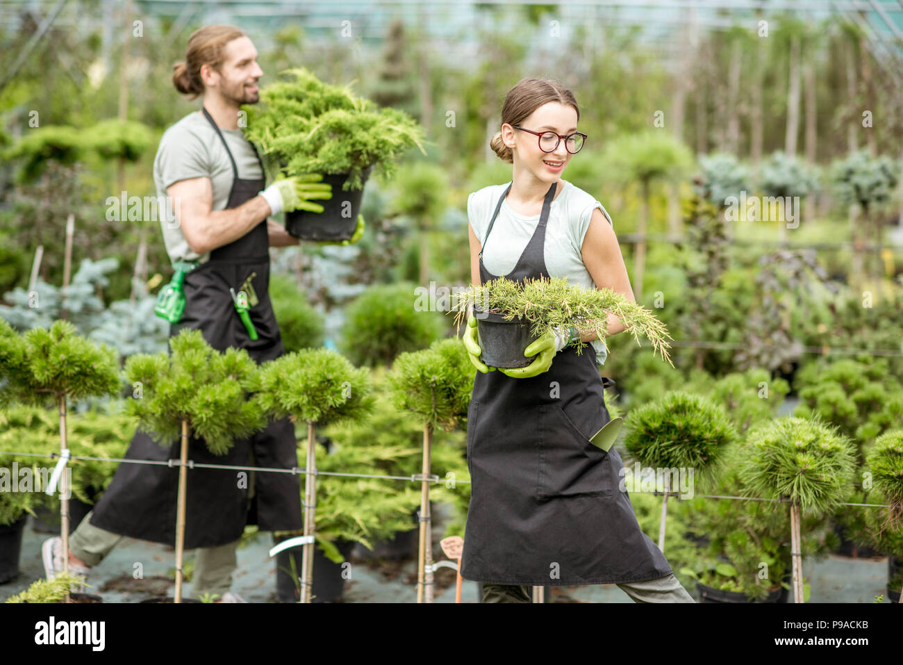 Young couple of workers in uniform working with green plants holding pots with conifer bush in the greenhouse - Stock Image