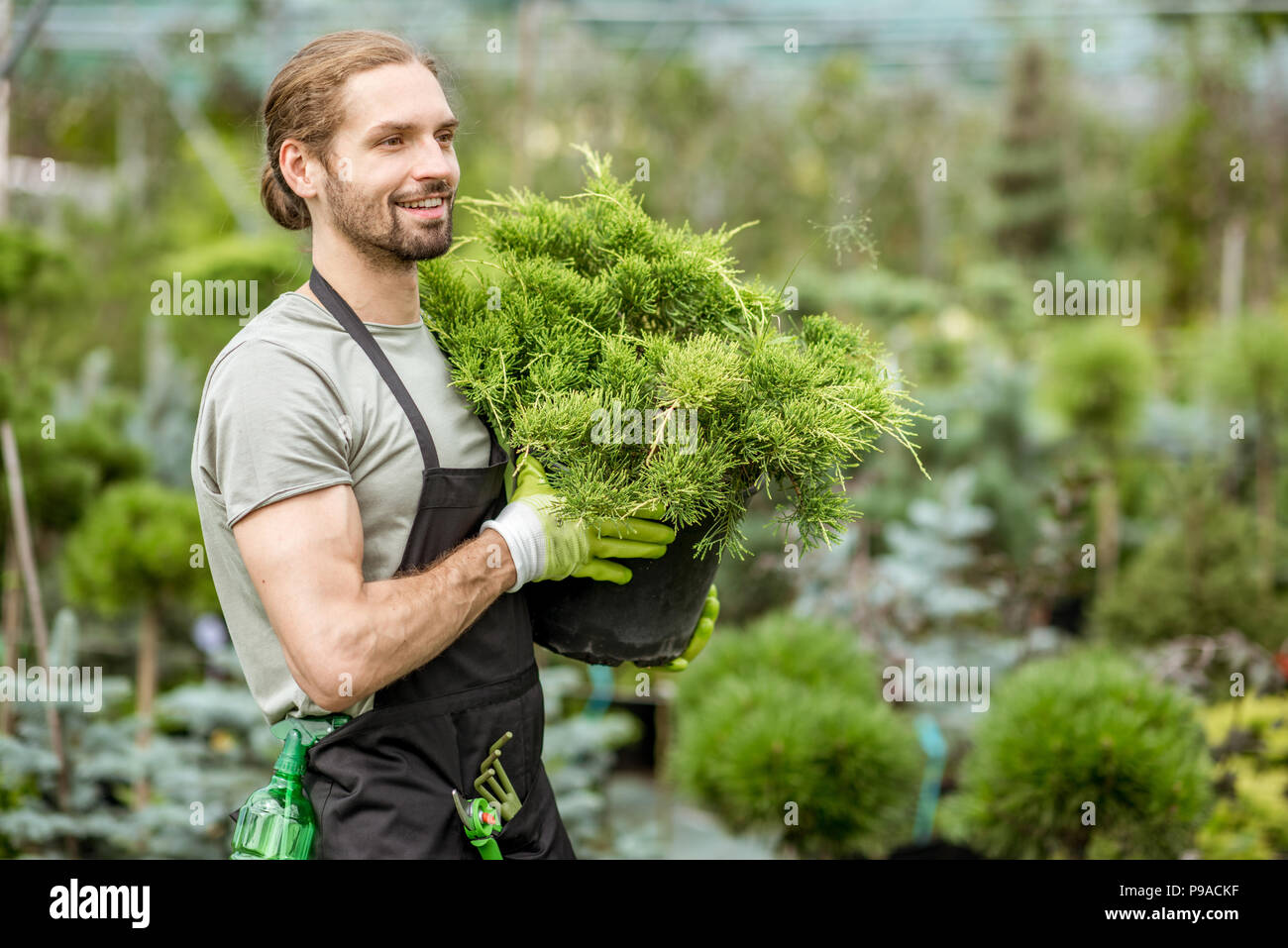Portrait of a handsome worker holding conifer bush working in the greenhouse of the plant shop - Stock Image
