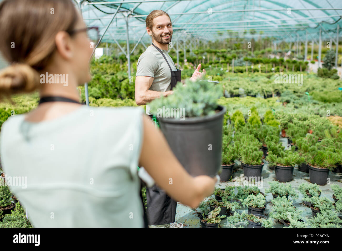 Workers supervising plants in the greenhouse - Stock Image