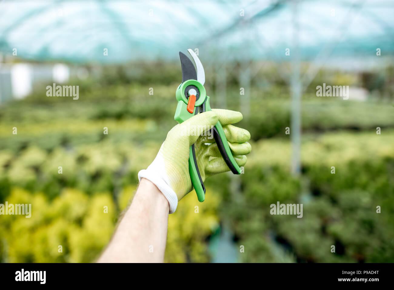 Scissors for gardening - Stock Image
