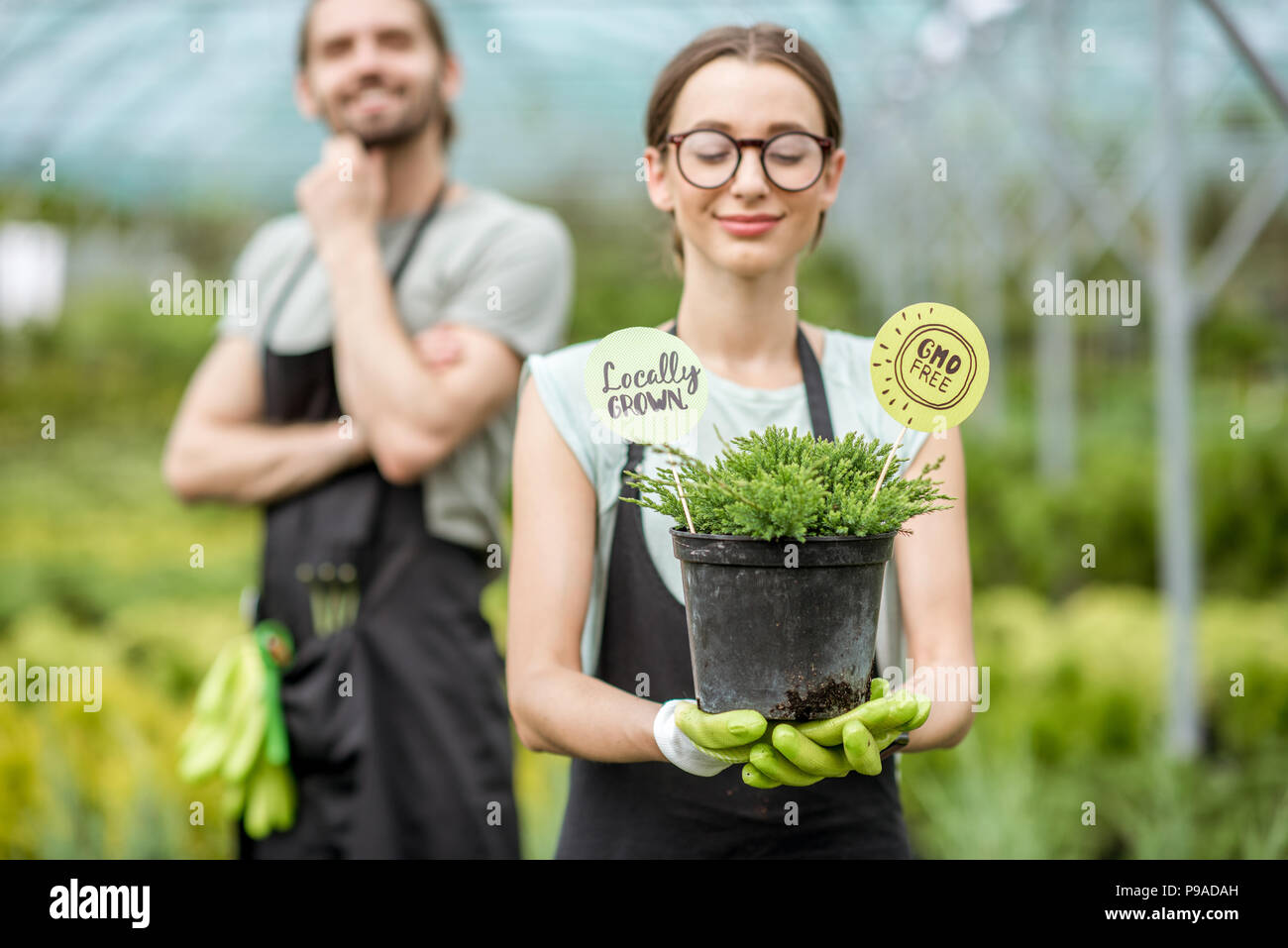 Gardener with green bush - Stock Image