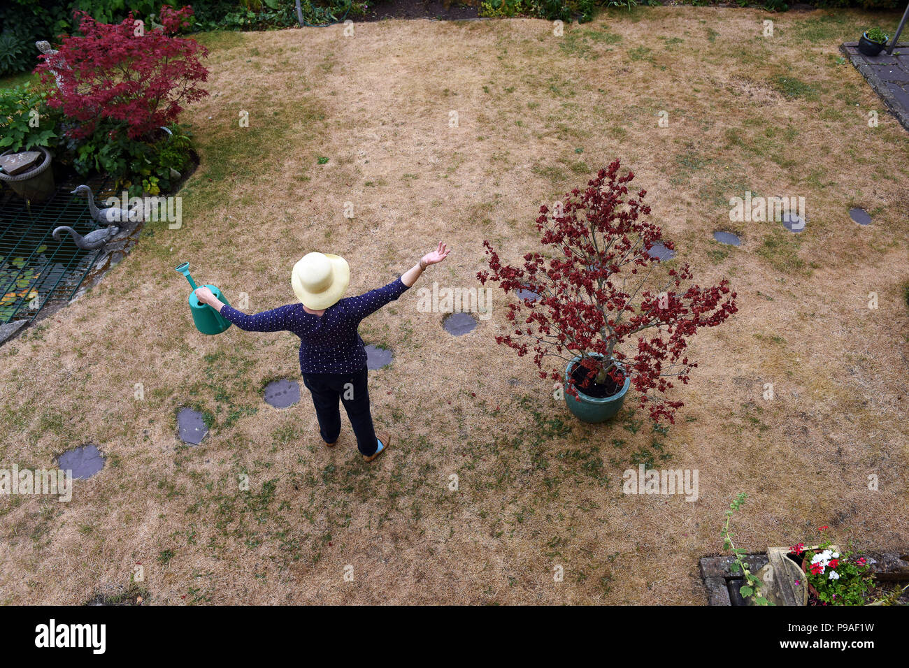 A gardener desperate for rain on her parched lawn in Telford, Shropshire, Uk - Stock Image