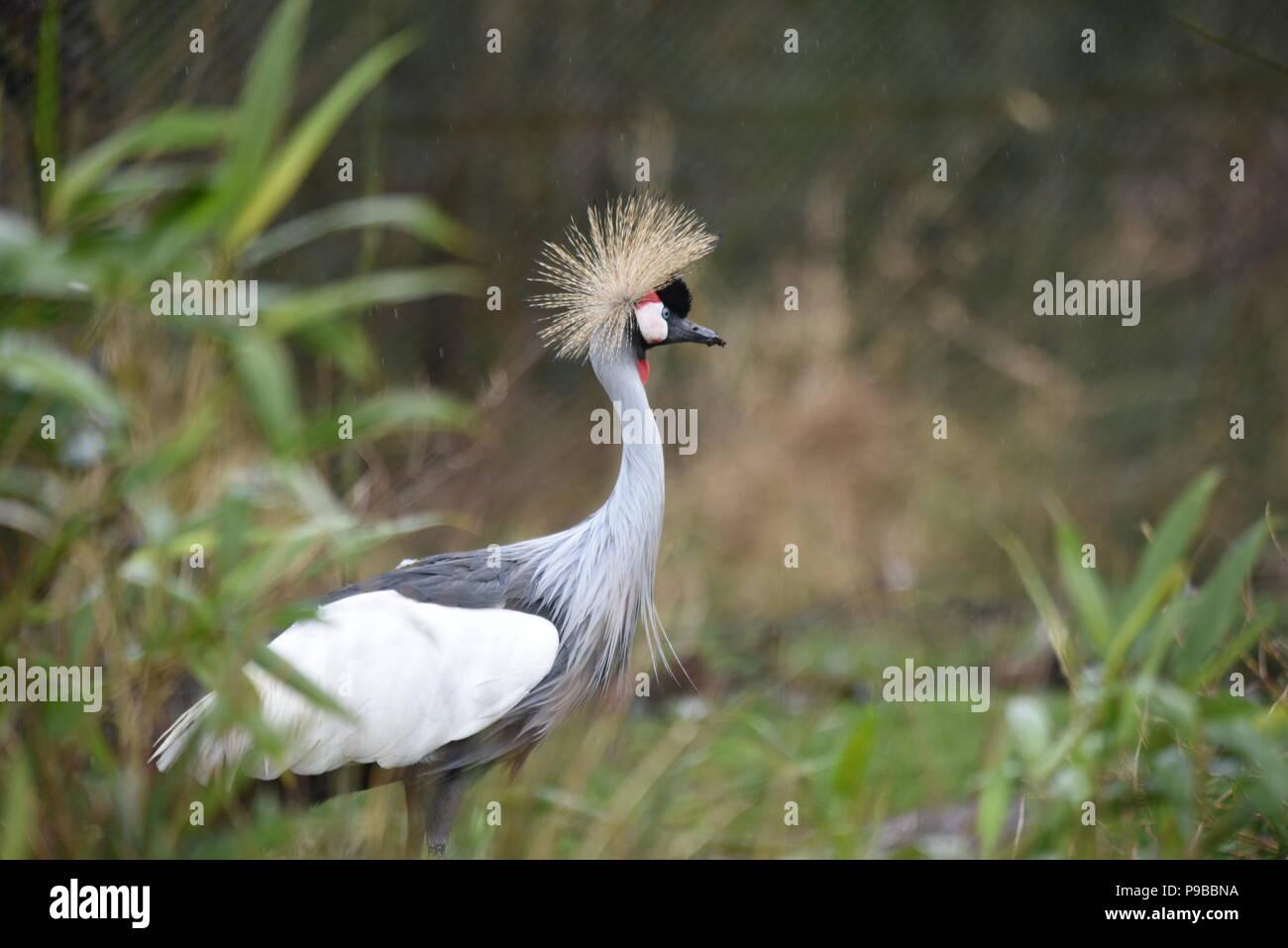 Asian Birds Stock Photos & Asian Birds Stock Images - Alamy